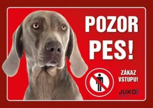 Pozor pes